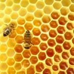 خواص و فواید عسل