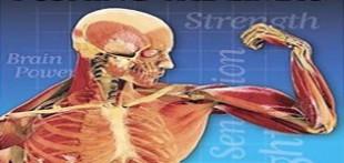 مجموعه مستند بدن انسان در تگنا دوبله فارسی
