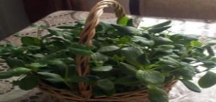 آموزش سبزه هفت سین با تخمه کدو