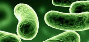 دانلود مقاله بهینه سازی فعالیت میکروارگانیسمها در تصفیه فاضلاب