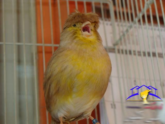 canary-kolab10