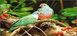 دانلود آواز پرندگان خوش صدا