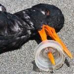 این پرنده زیبا را ما کشته ایم