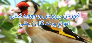 دانلود مجموعه کتابهای پرورش انواع پرندگان زینتی